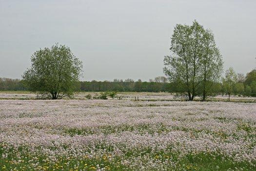 2010_04_29_02