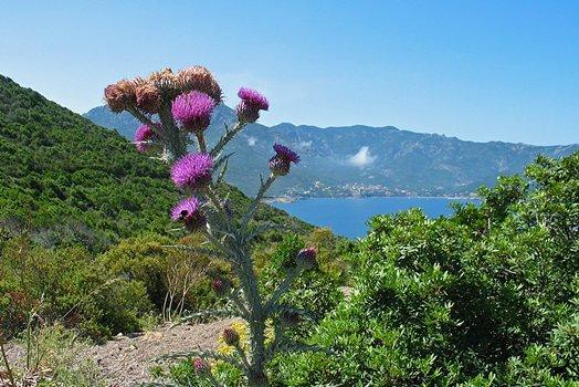 Corsica167