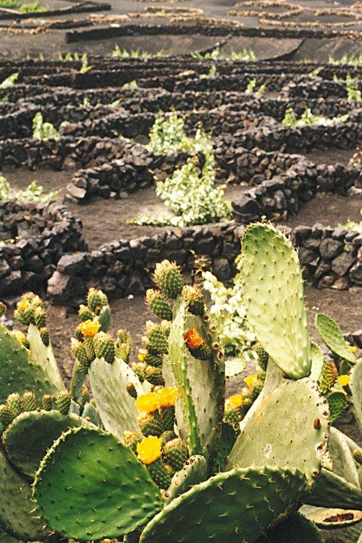 Lanzarote 2001 36