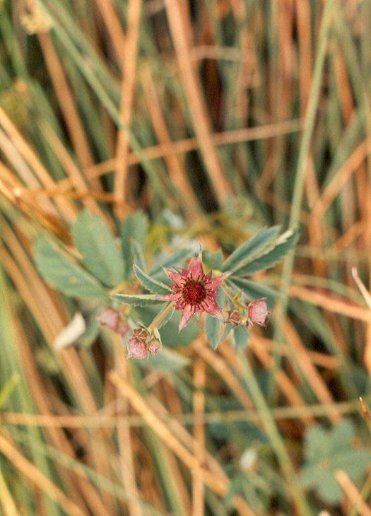 bloemkl_0025