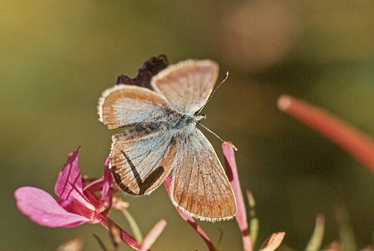 vlinderkl_0035