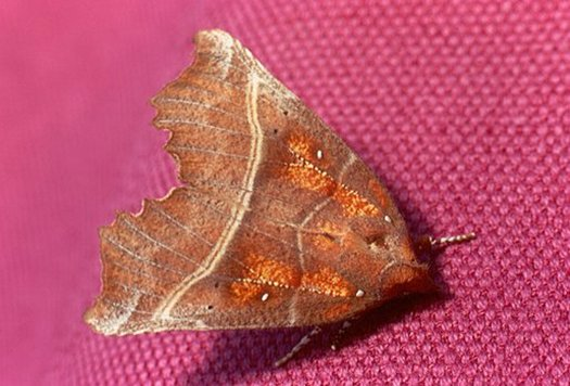 vlinderkl_0032